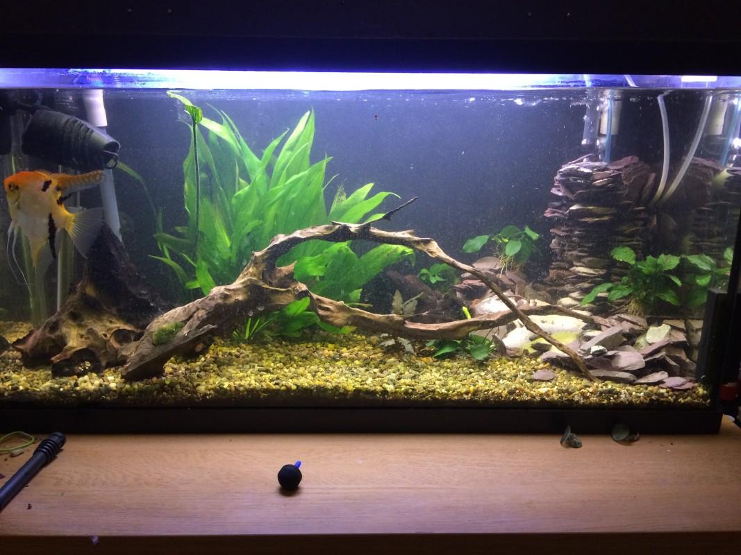 My 110L aquarium